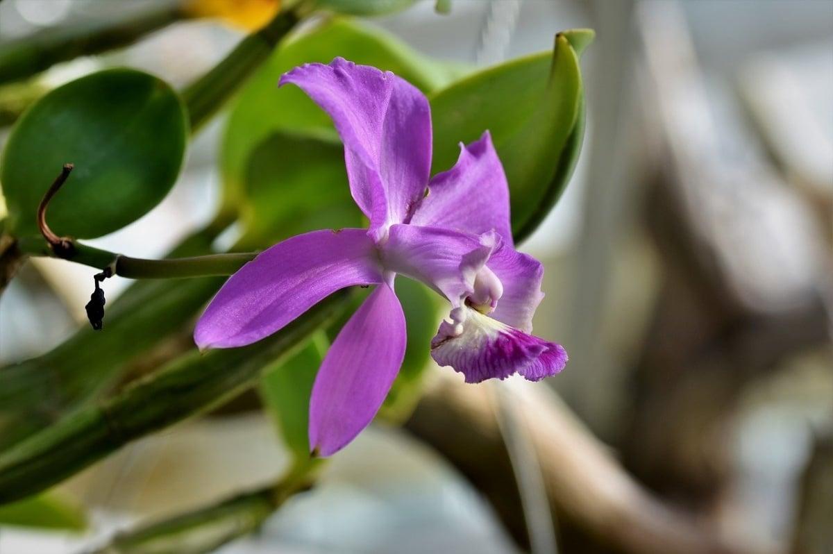 El riego de las orquídeas se hará controlado