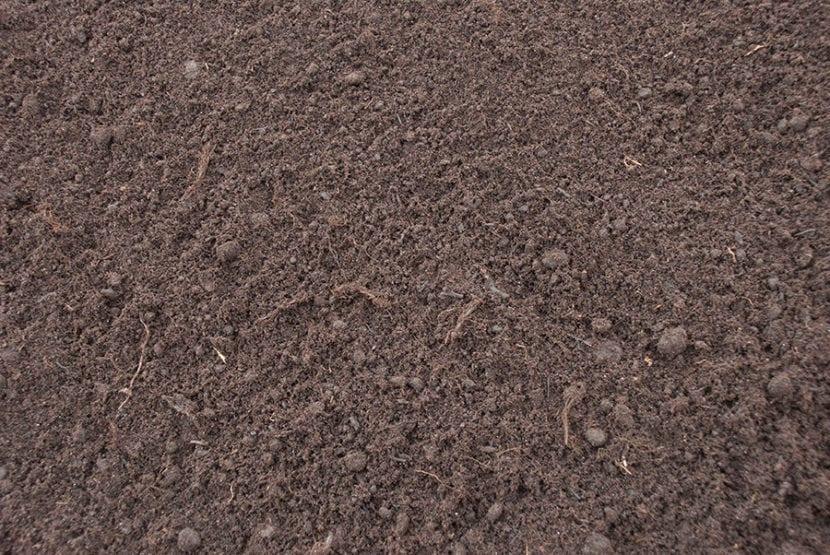Turba negra, un sustrato ideal para tu Ficus robusta