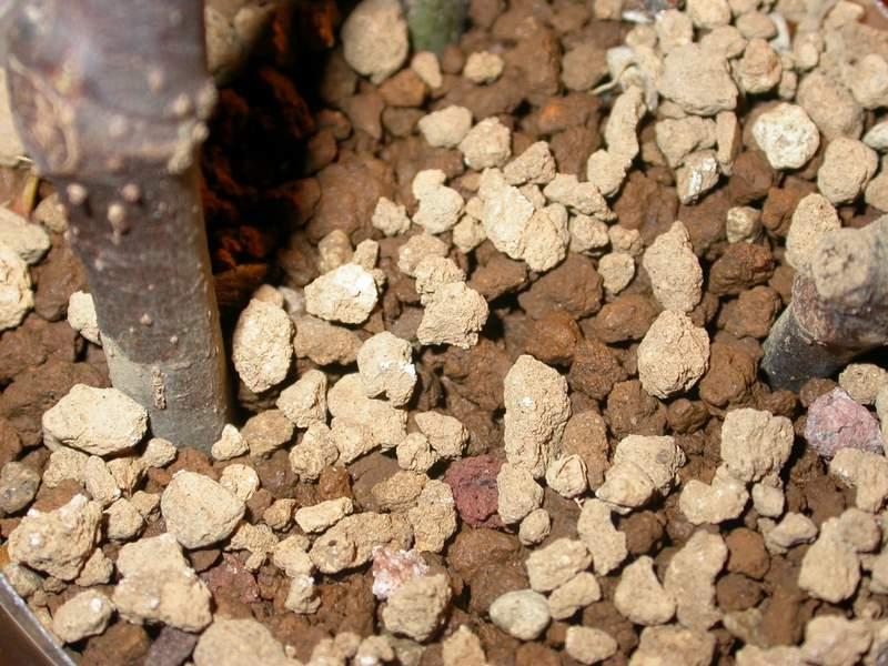Akadama seca y húmeda
