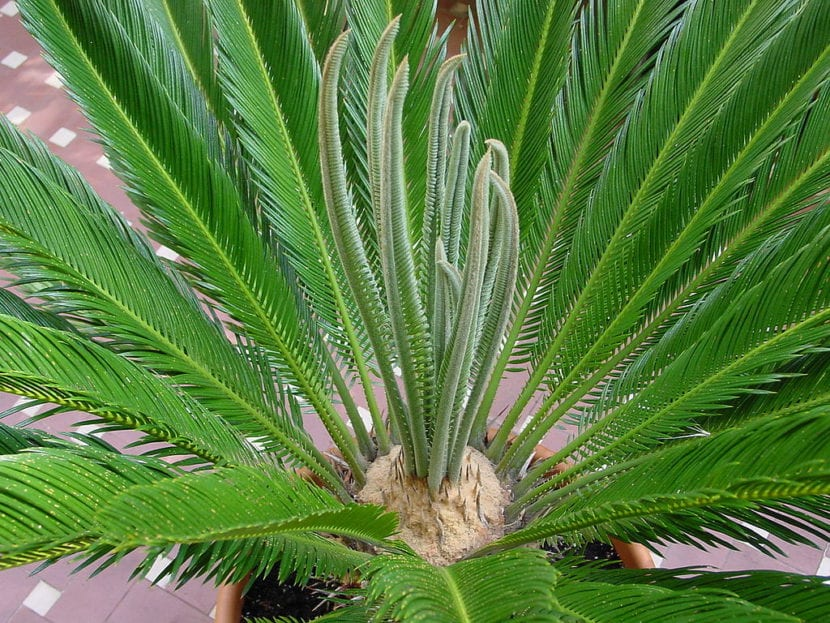 5 Plantas Sin Flores Para Jardin O Maceta