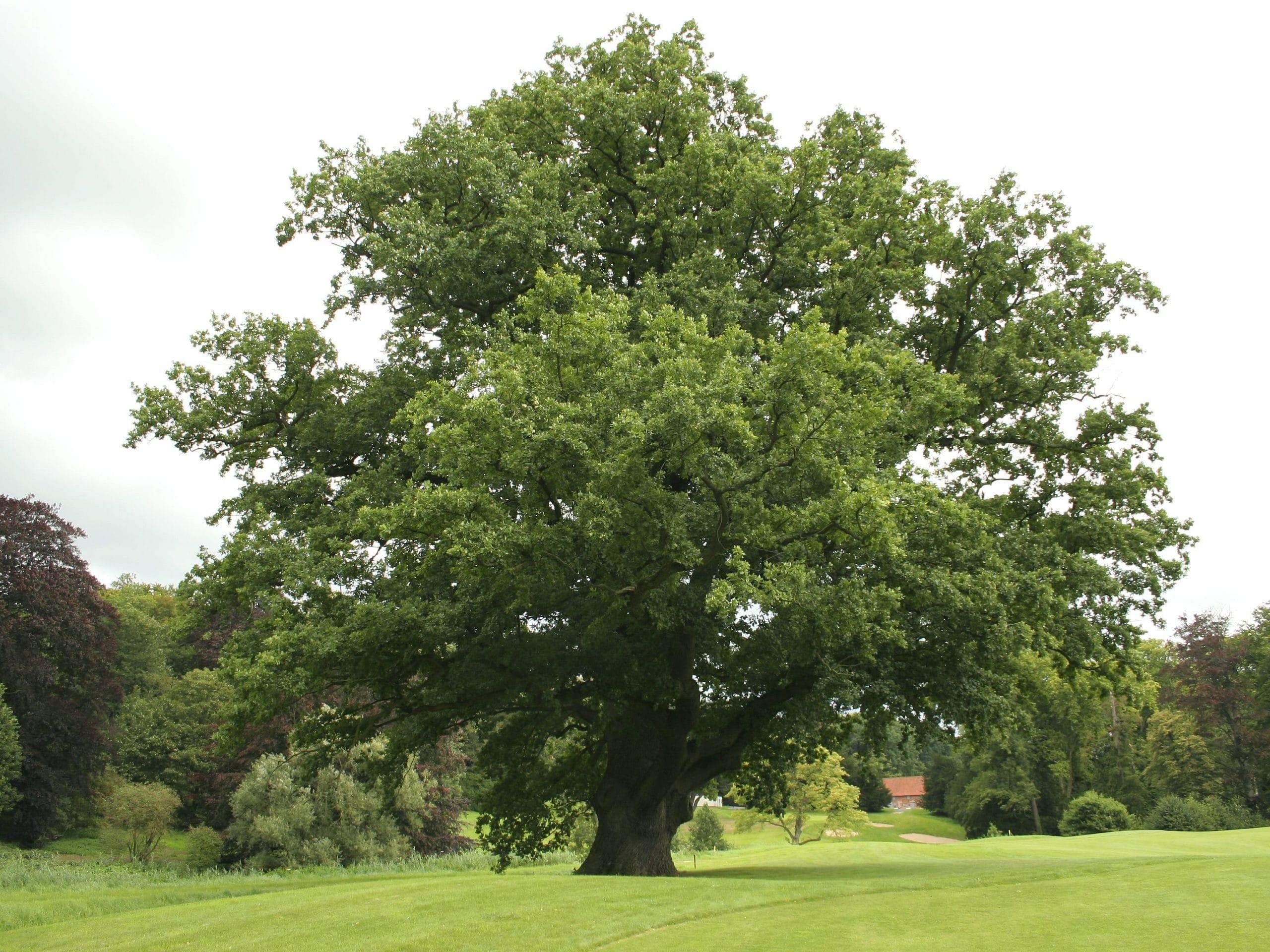 Resultado de imagen de carballos