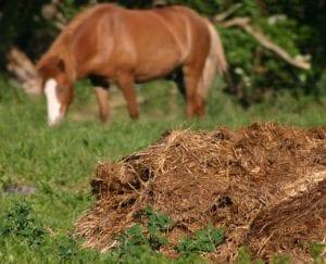 Estiércol de caballo, un abono muy recomendable para la nectarina