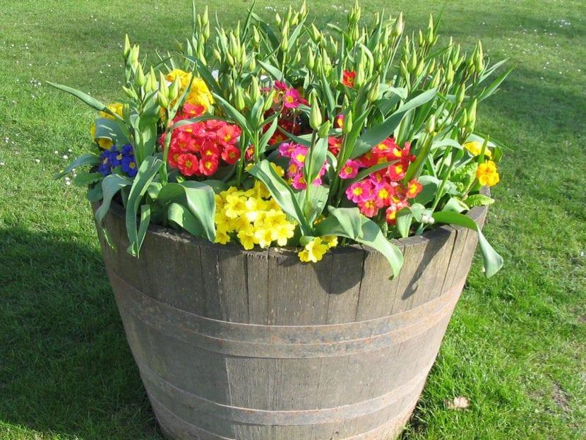 Flores en cubo