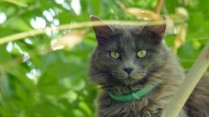 Gato en jardín