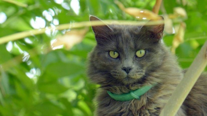 C mo ahuyentar ratones for Ahuyentar gatos jardin