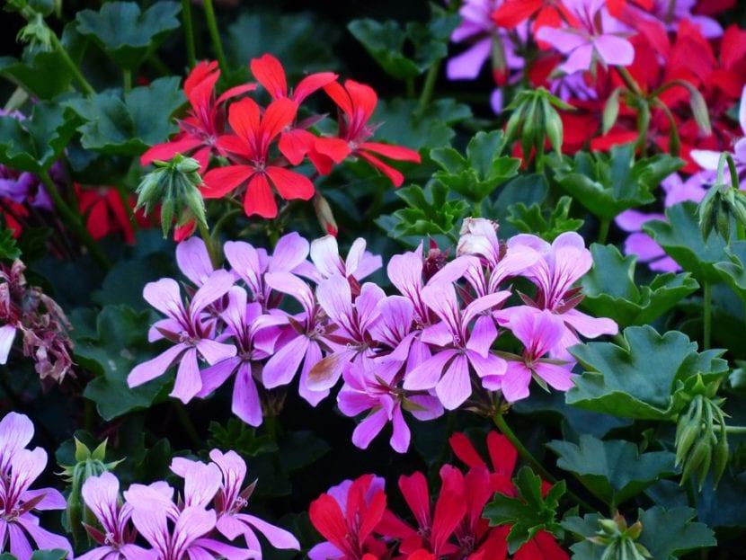 9 flores colgantes para balc n o terraza for Mesa colgante para balcon
