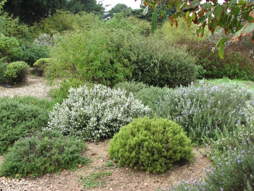5 nombres de arbustos resistentes a la sequ a for Arbustos con flores para jardin