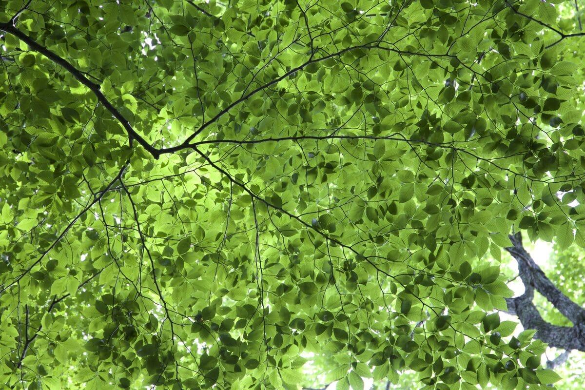 Las hojas de los árboles varían en forma y tamaño