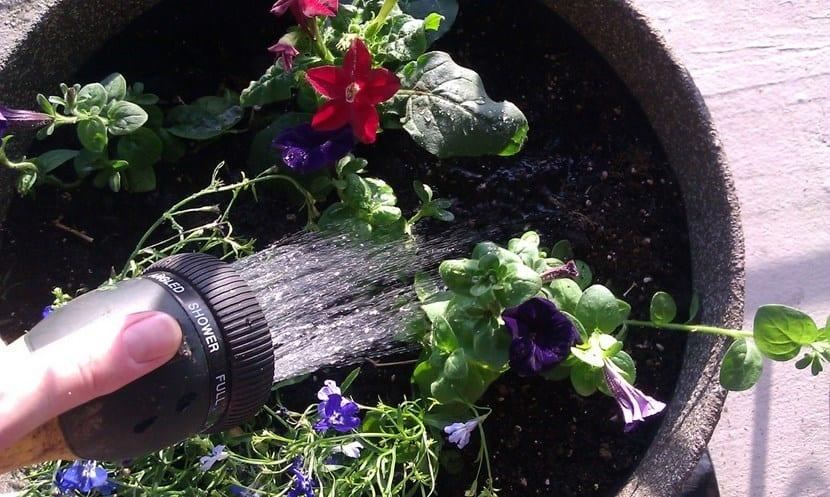 Riego en jardinería