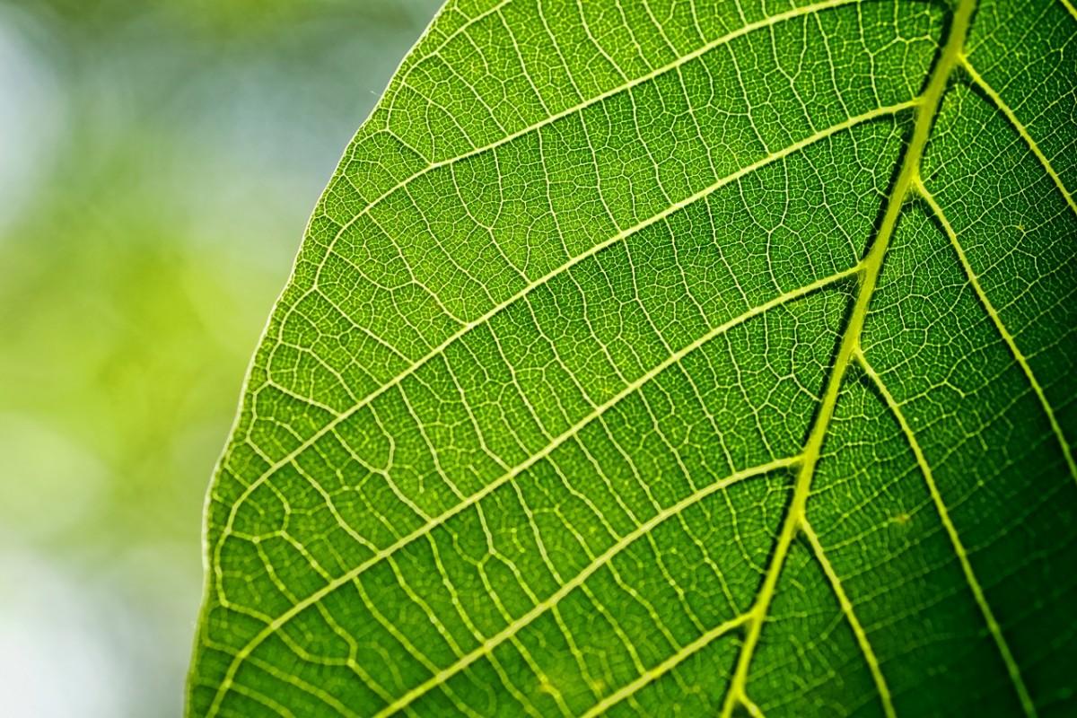 Las hojas realizan la fotosíntesis