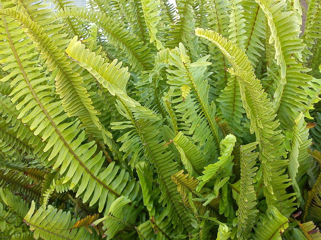 10 nombres de plantas de interior Nombres de plantas comunes
