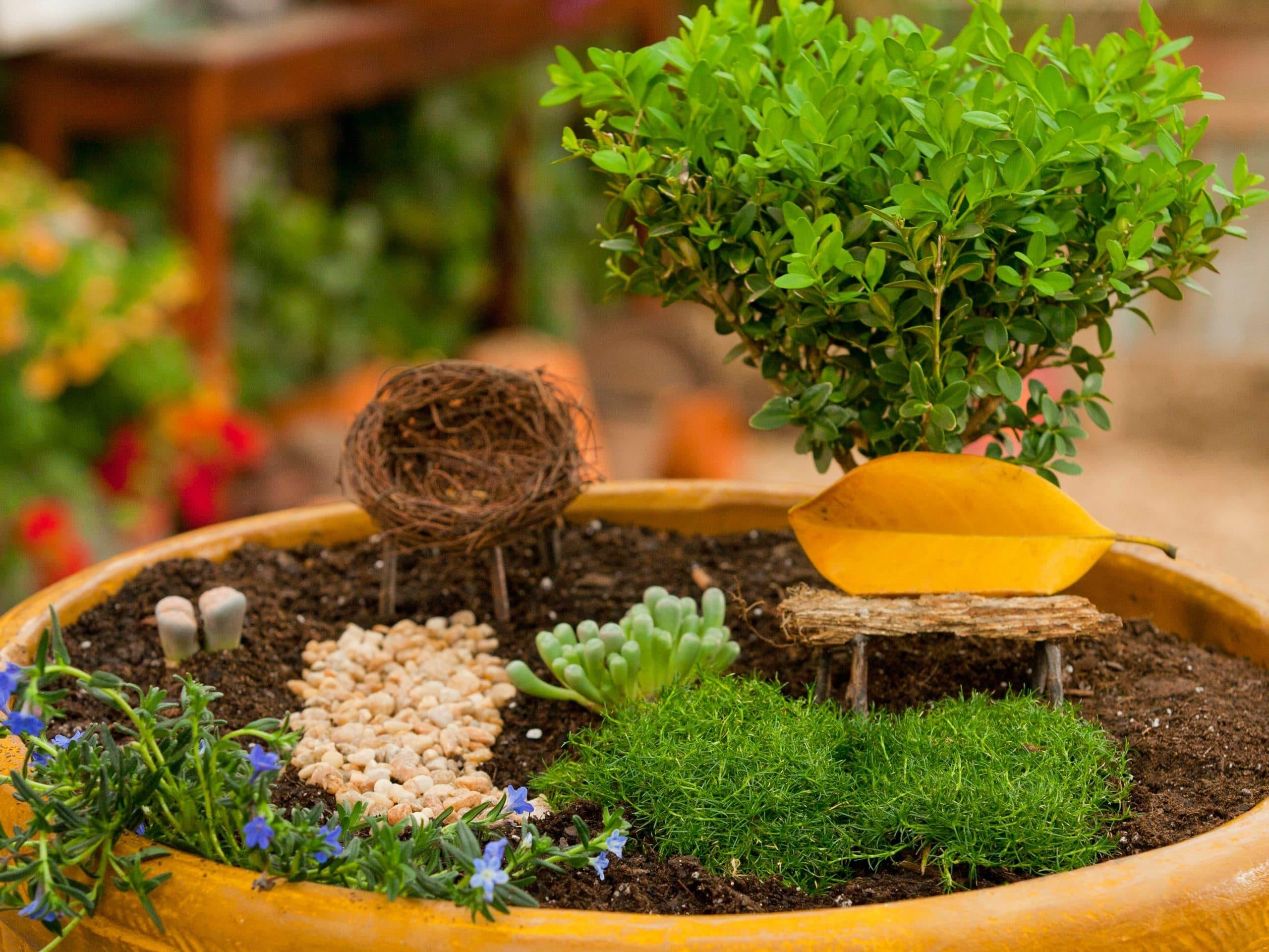 C mo hacer un jard n en miniatura for Jardines en miniatura