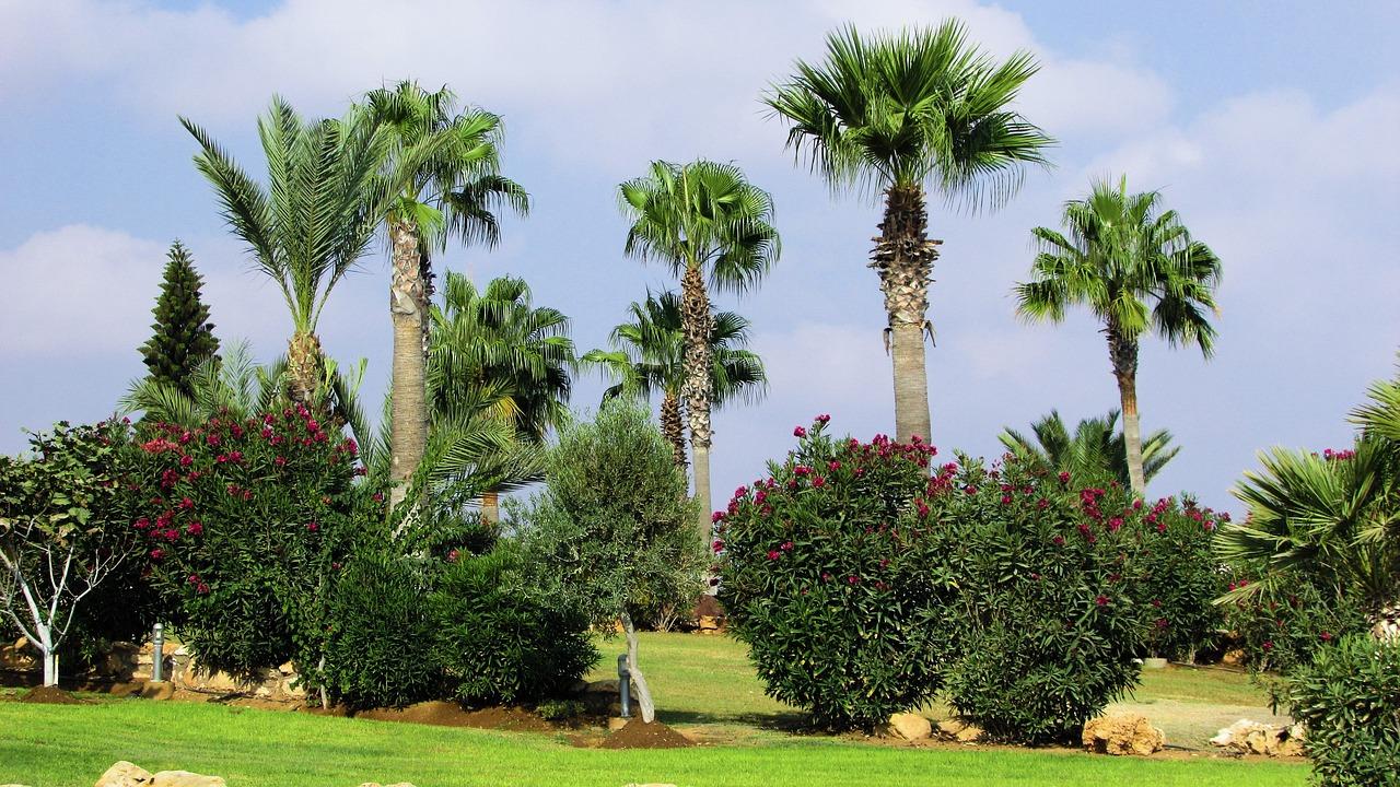 Las palmeras necesitan espacio para crecer