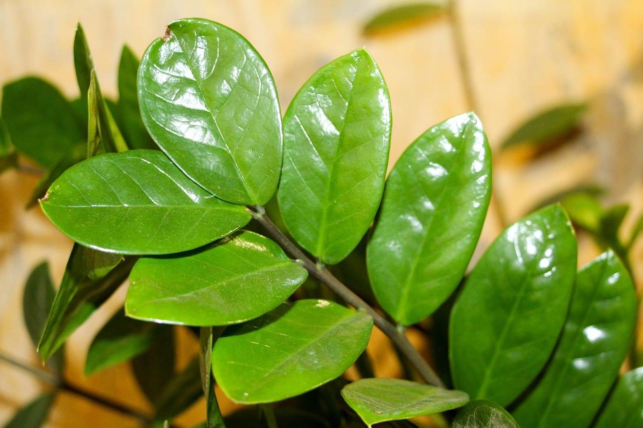 C mo cuidar plantas de interior for Plantas de interior muy duraderas