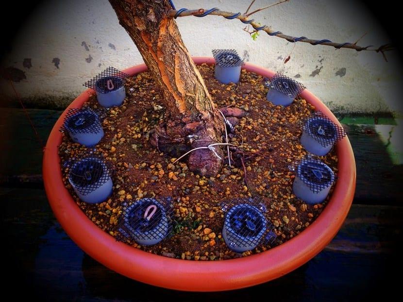 Abono bonsai