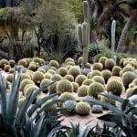 Cactus en jardín