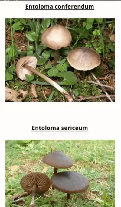 guia-de-setas-y-hongos