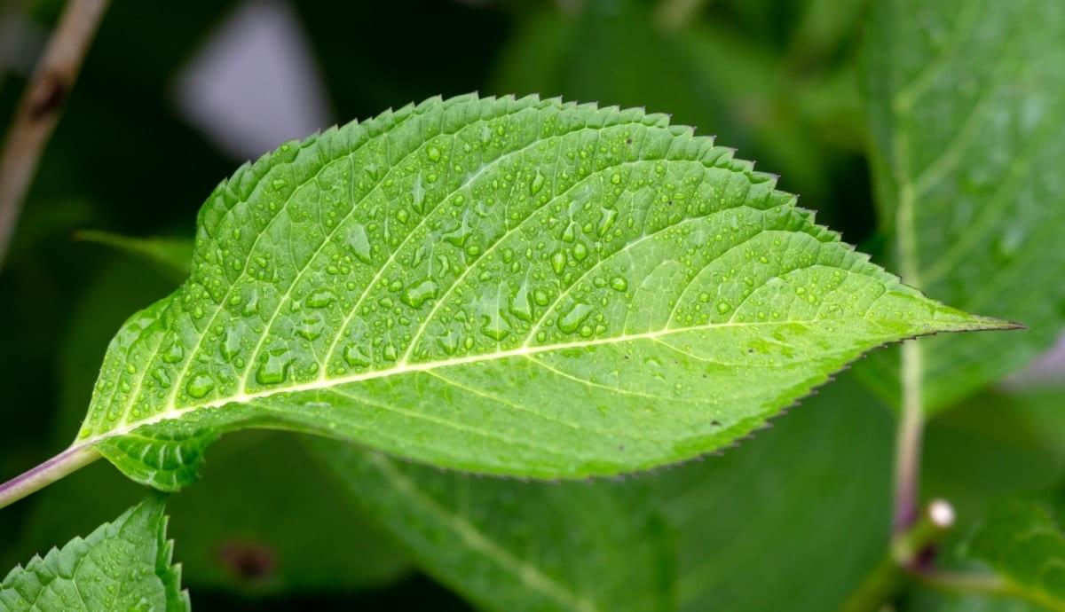El abono foliar es ideal para que las plantas obtengan nutrientes
