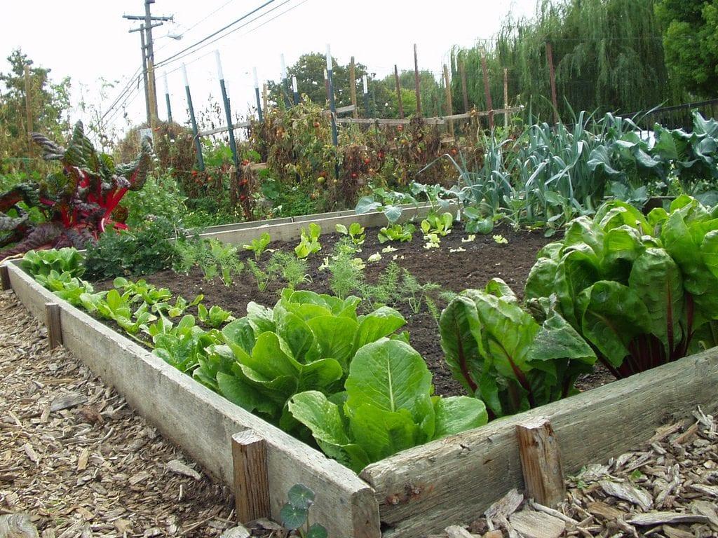 C mo hacer un huerto en el jard n - El jardin en casa ...