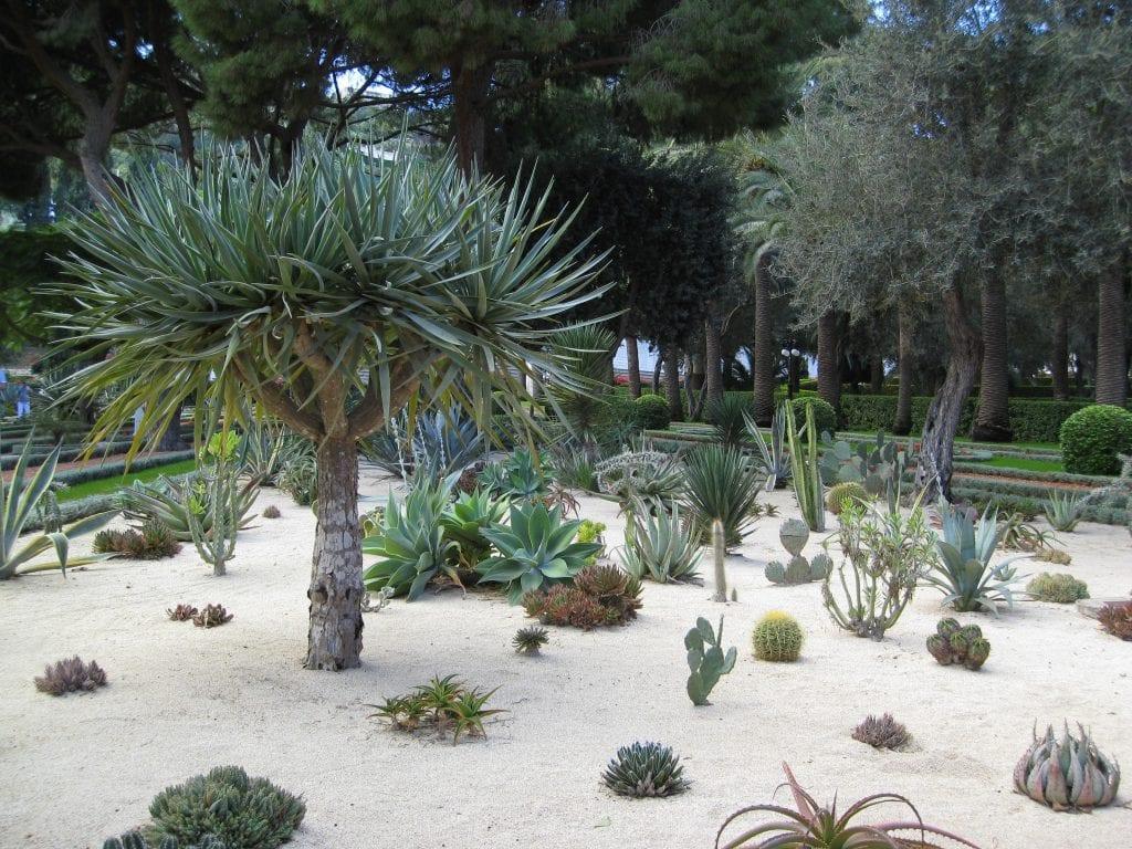 Jardín de suculentas