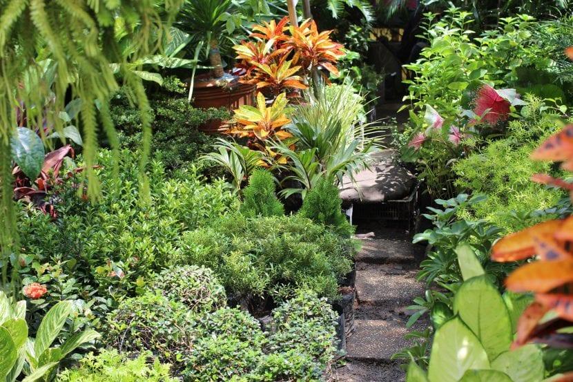 6 plantas tropicales para exterior