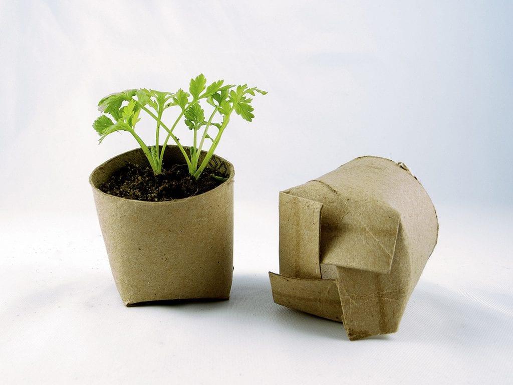 Planta en rollo de papel higiénico
