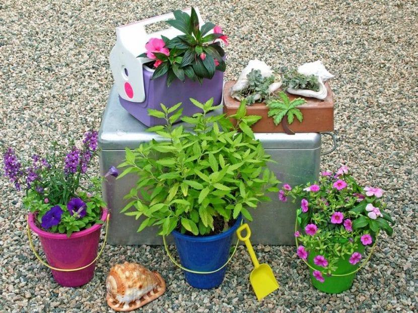 Plantas en juguetes para niños