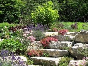Plantas en las piedras