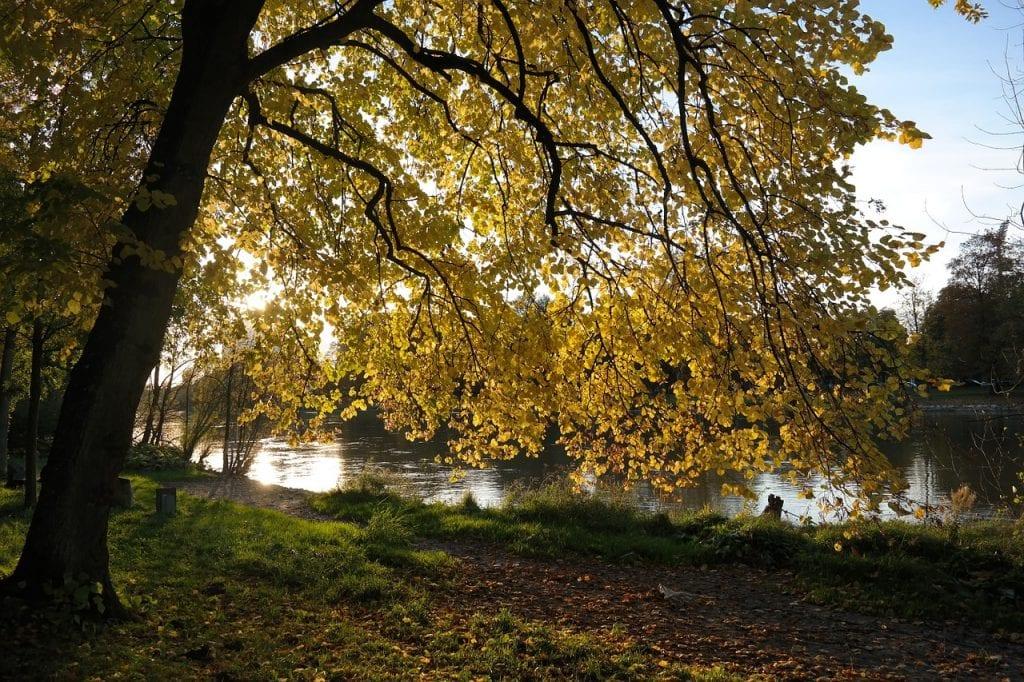 Tilo en otoño