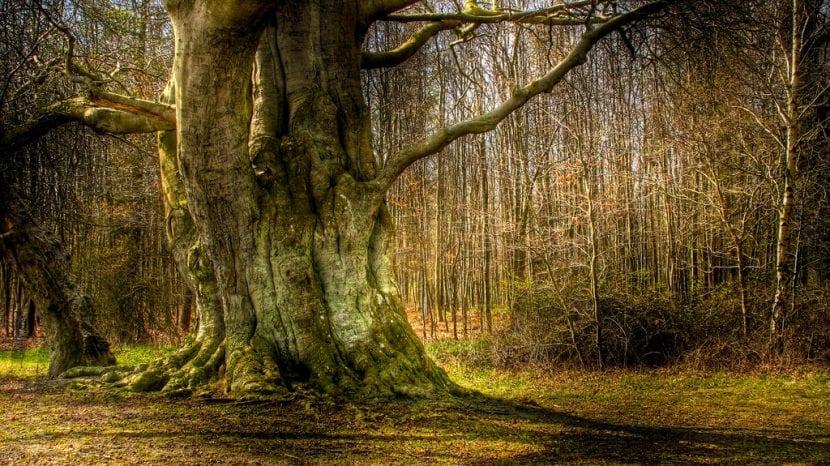 El tronco de un árbol viejo