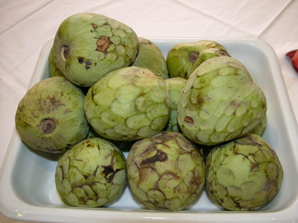 Las chirimoyas son fáciles de cultivar