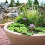 Jardín acuático con plantas