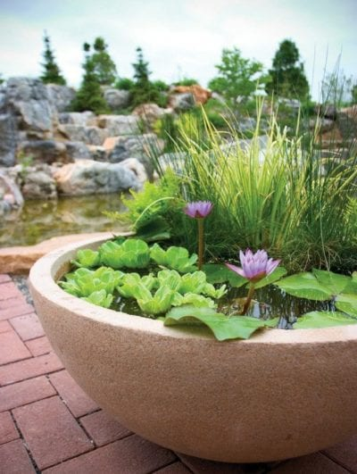 C mo decorar con plantas acu ticas for Jardin acuatico