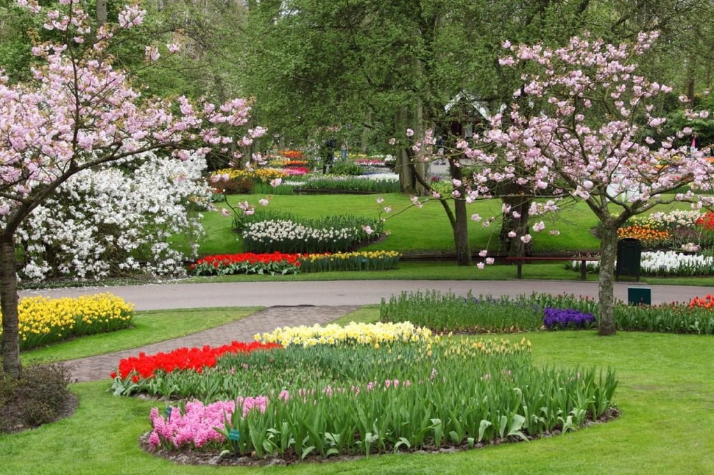 Jardín de flores