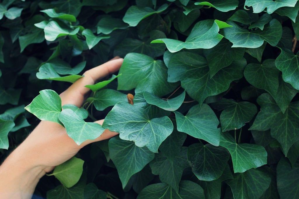 Consejos de jardiner a para principiantes for Utiles de jardineria