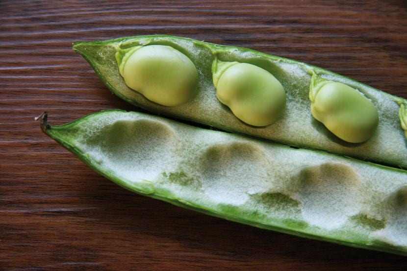 legumbres-de-habas
