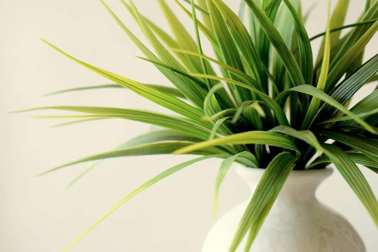 Planta de interior en maceta