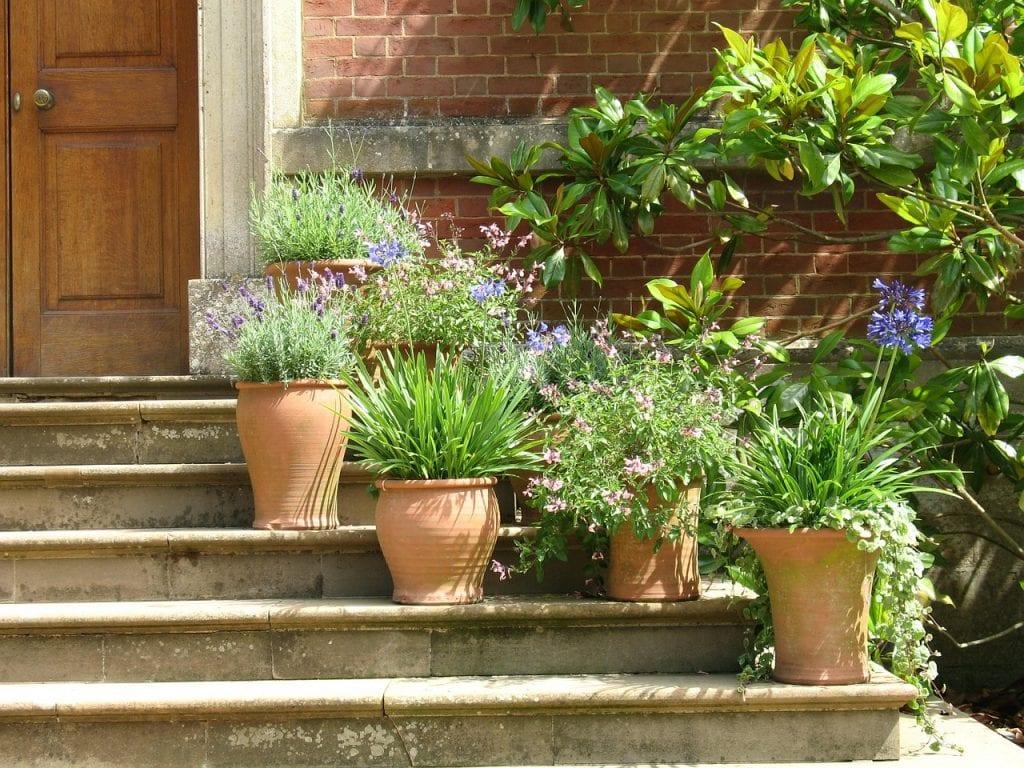 Plantas en la escalera