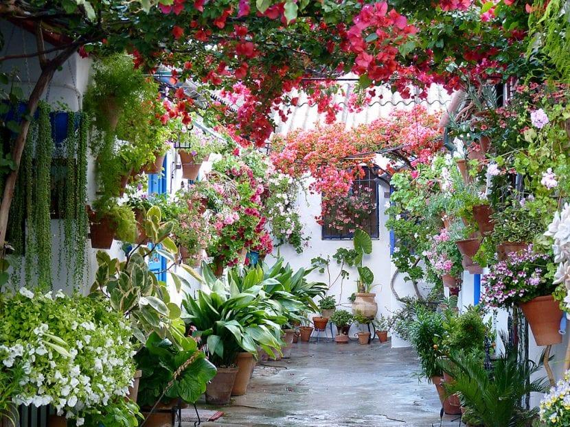 Plantas en un patio
