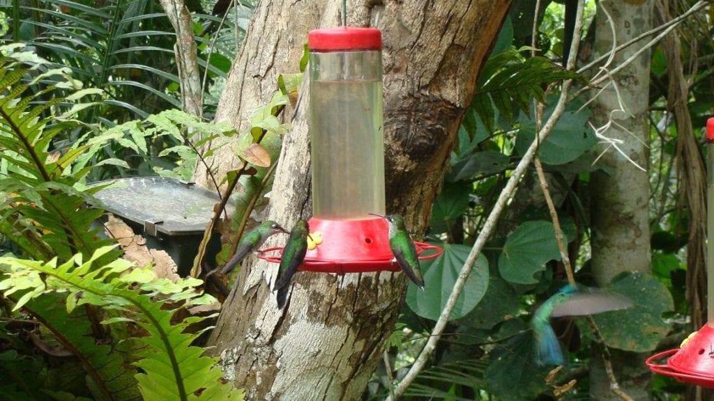 colibries_bebiendo