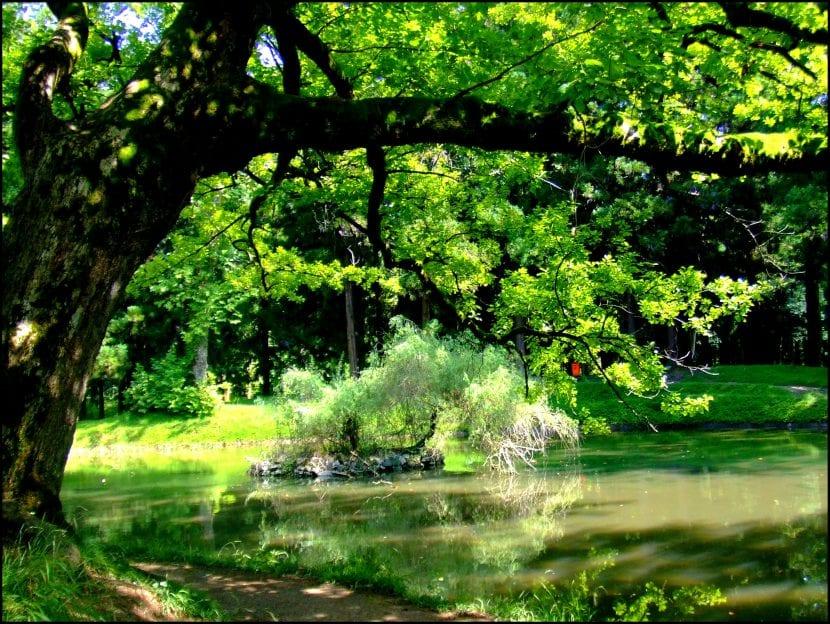 Árbol de sombra en un jardín