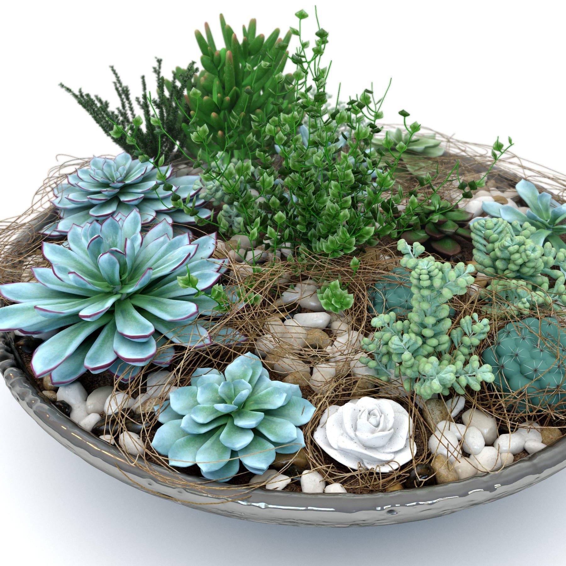 C mo hacer una composici n de cactus y plantas crasas - Jardines con cactus y piedras ...