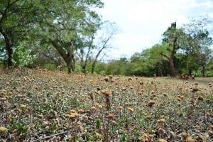 Jardín seco