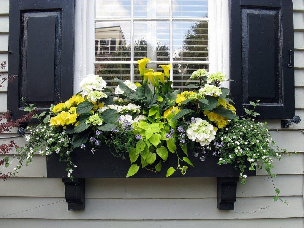 jardinera-con-plantas