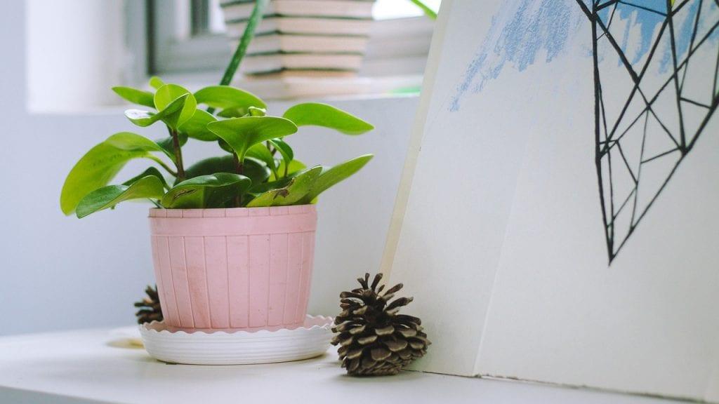 planta-en-maceta