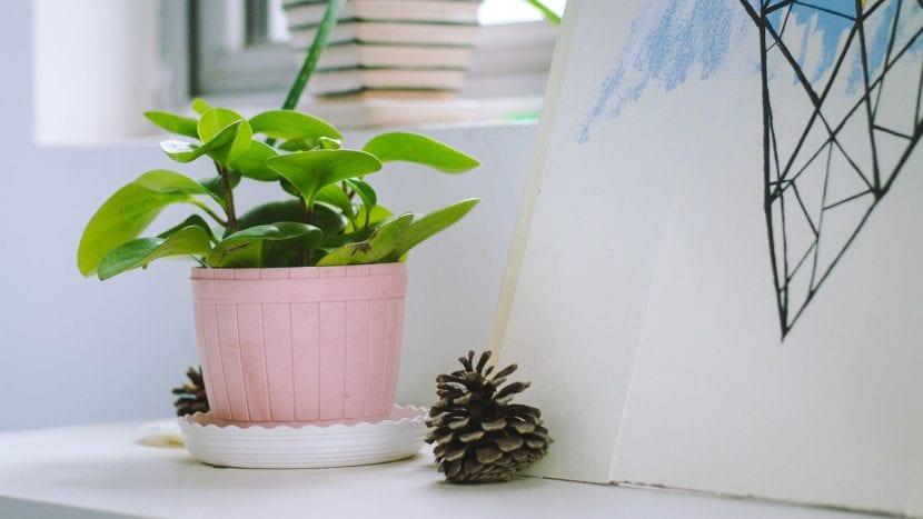 Planta en maceta dentro de casa