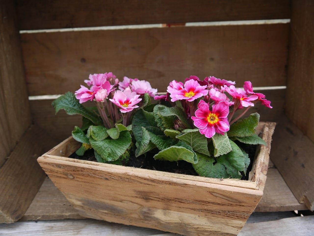 qu plantar en una jardinera