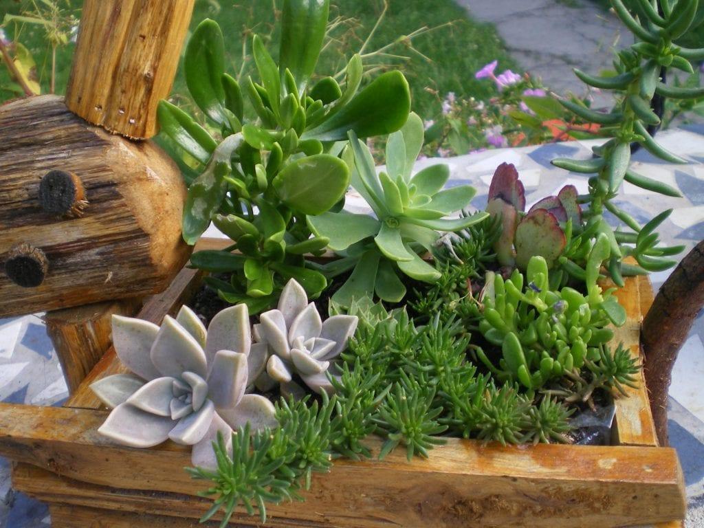 C mo hacer una composici n de cactus y plantas crasas for Plante grasse exterieur rustique
