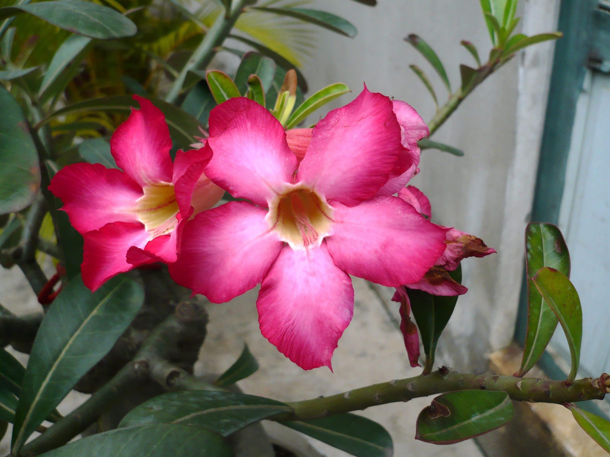 Qu son y c mo se cuidan las plantas con caudex for Cuales son las plantas decorativas
