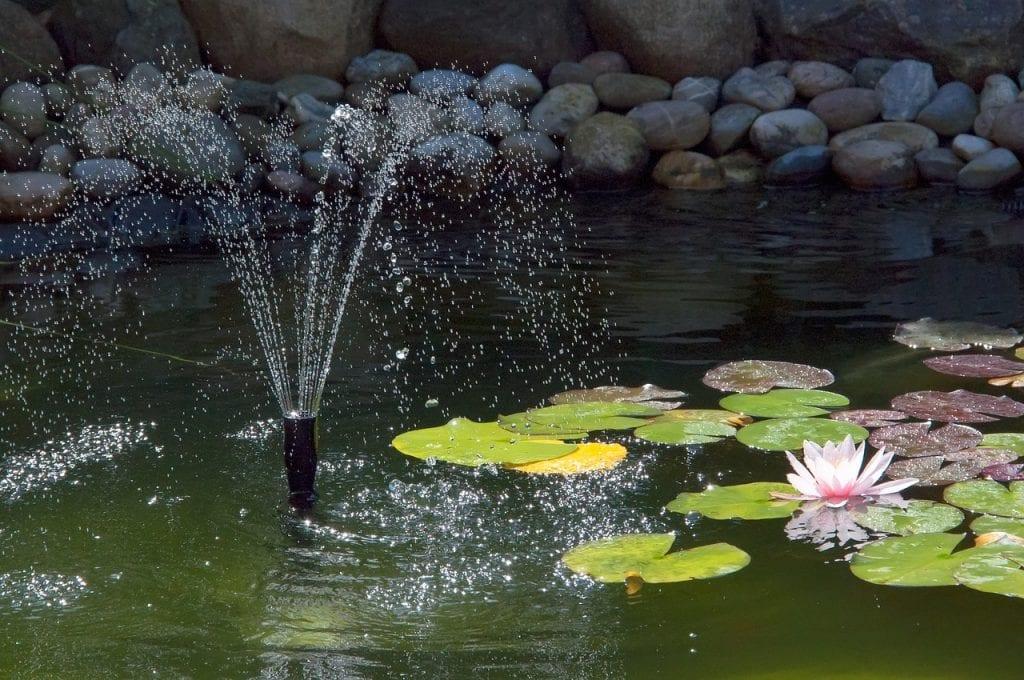 Nenúfar en estanque